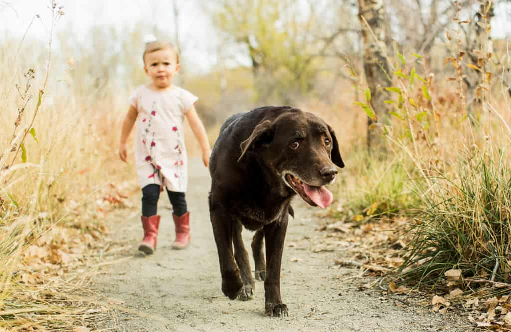 young girl and her dog walk on a trail