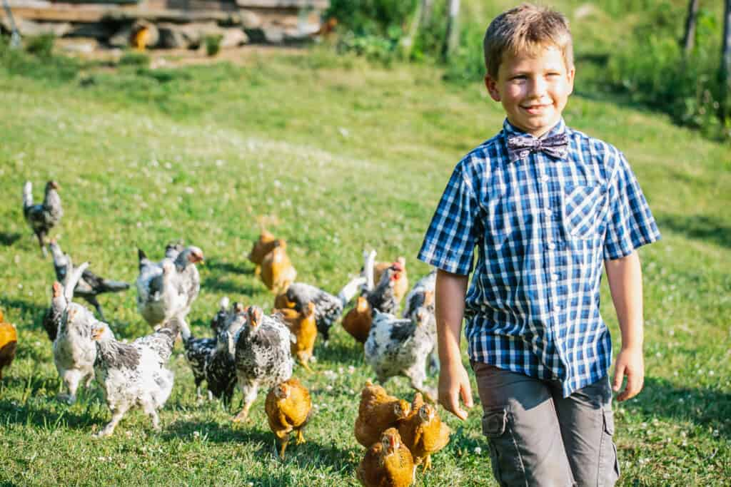 family photography both walks with chickens